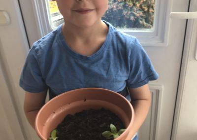 Grow sunflowers grow!